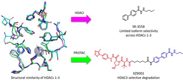 Illustration from Yufeng and Xuan's Chemical Communications article shoing HDACs being broken down through PROTACs