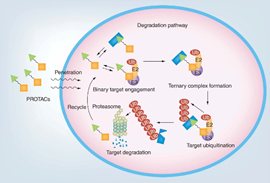 Illustration from Xingui's review published in Future Medicinal Chemistry.